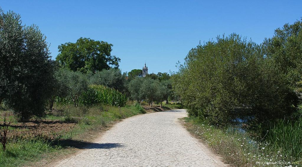 Petite route, traversant des champs verdoyants