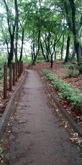 찔레꽃 향기 가득한 도서관 숲속 산책길