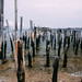 pilings in provincetown