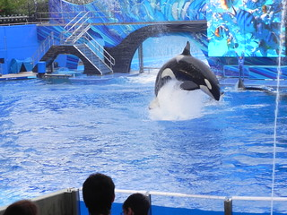 SeaWorld 7-8-11 | by MomMaven