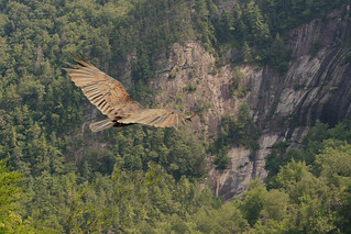 Flying Over the Gorge (Explored) | by flutterbye216