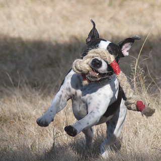 Rope Dog Toys To Make