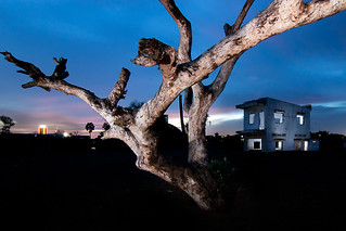 Dying Tree and House | by Chea Phal