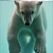 Polar Bear Cub Underwater