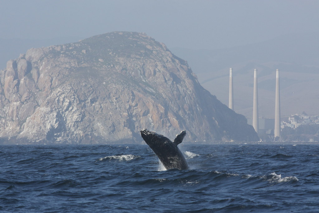 New Mini Cooper >> humpback whale, morro rock and smokestacks | the humpbacks p… | Flickr