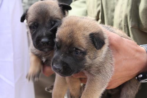 Dog Training Company Letterhead