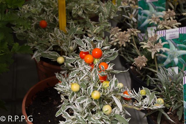 Flores y plantas viveros del cerecedo leon espa a for Viveros y plantas
