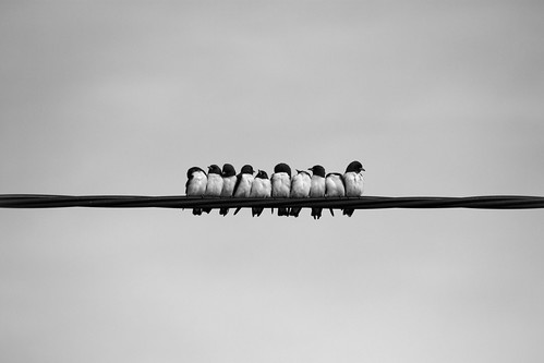113. Ten Little Birds | by S719