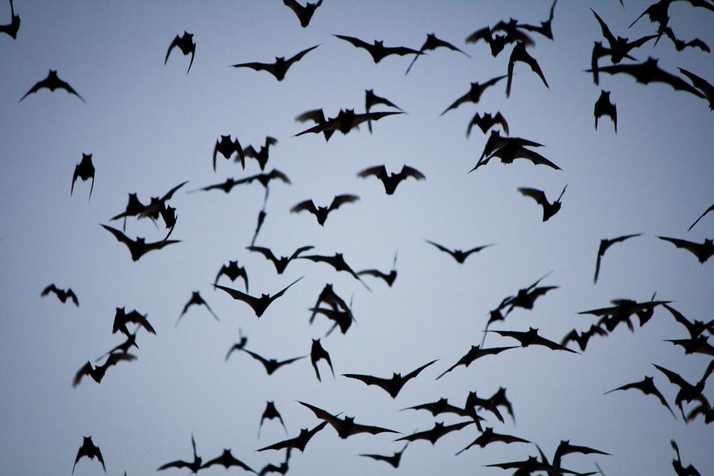bat swarm silhouette