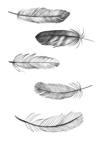 feathers | by Clare Owen Illustration