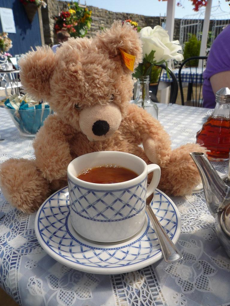 Teddy Bear Drinking Beer