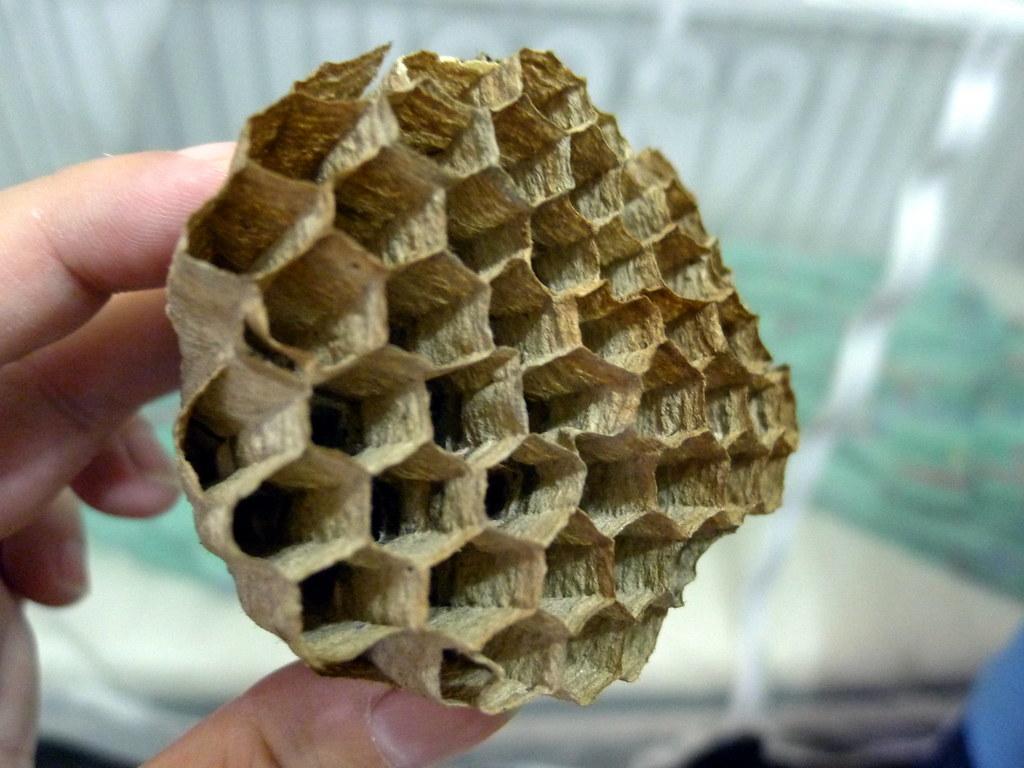 裝冷氣時窗沿有個蜜蜂窩