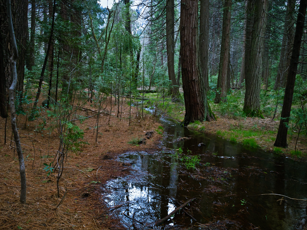 Wooded Scene with Snow Melt   Snowmelt on the Valley floor i ...