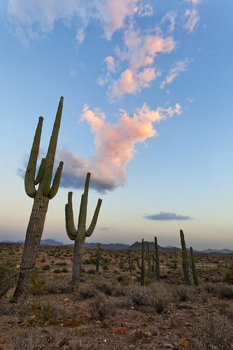 Saguaro Alley | by Mike Olbinski Photography