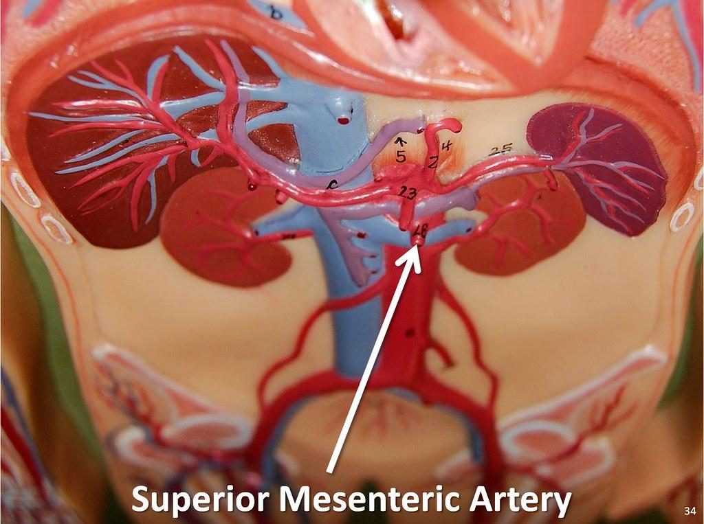 Human anatomy study website