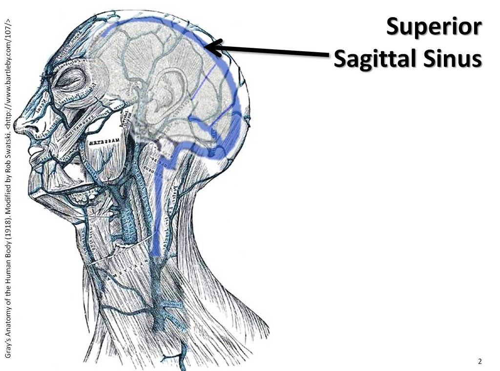 Superior sagittal sinus - The Anatomy of the Veins Visual … | Flickr