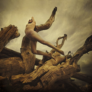 among the decay of wild forest | by brookeshaden