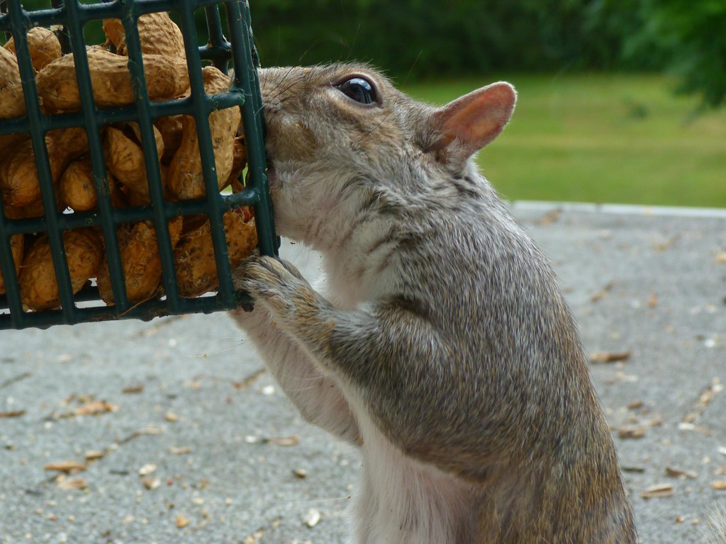 Squirrel Bait | Rusty ...