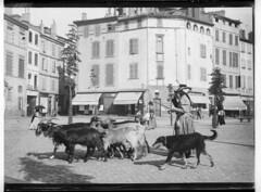 Chèvres et chevrière, place du Salin by museumdetoulouse