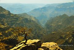 """""""tree on the rocks"""""""