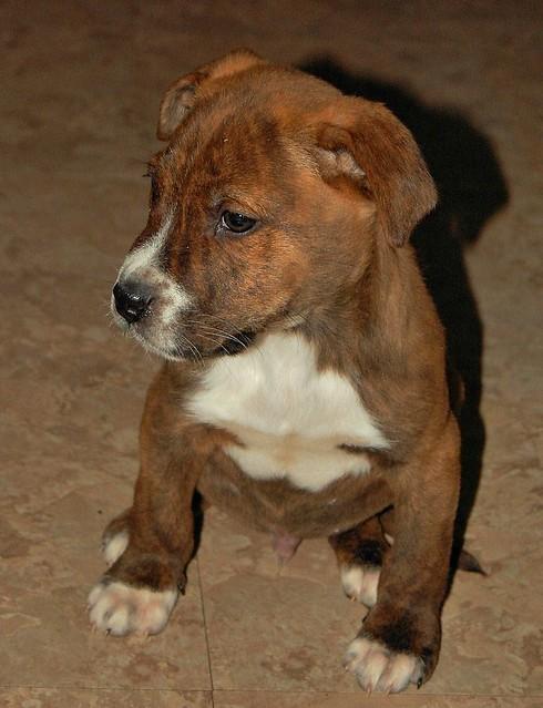 Dog Adoption Lancaster Ma