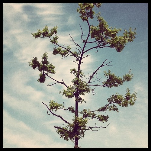 Tree | by Kate Shipway