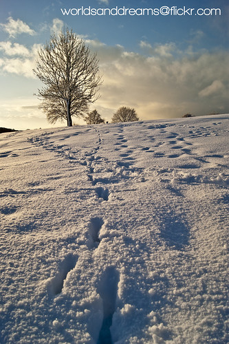 footsteps in the snow | by worldsanddreams