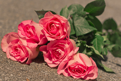 five pink roses | by Shandi-lee