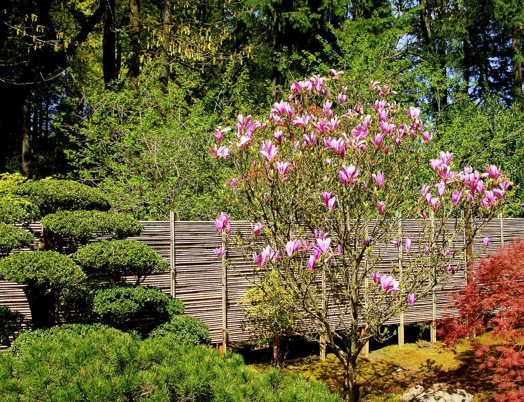 magnolia portland