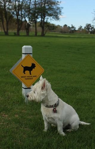 Dog Rescue Ireland Ie