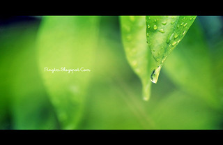 Dewdrop | by Ping™