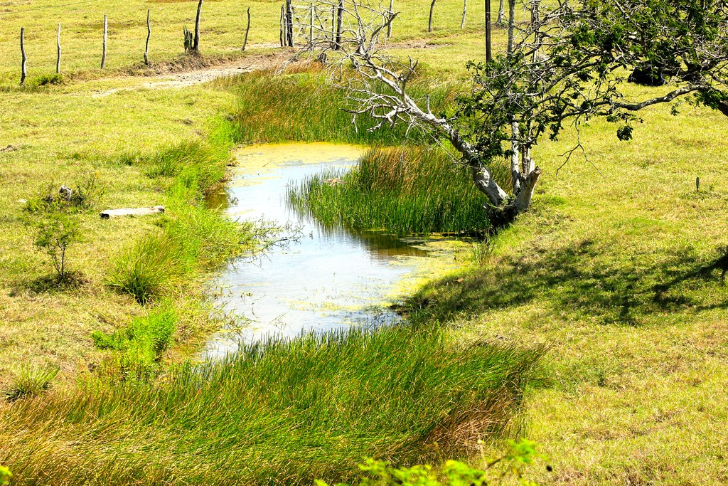 Resultado de imagem para nascentes de rio bahia