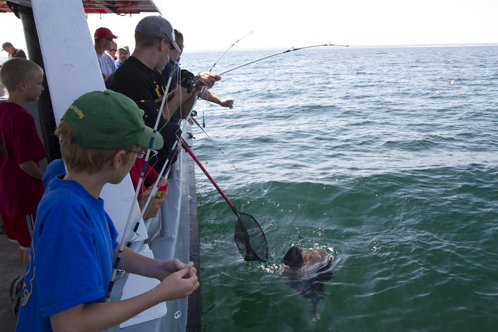 Electric Torpedo Ray Torpedo Nobiliana While Fishing
