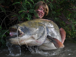 Big Catfish from France | by wefish.de