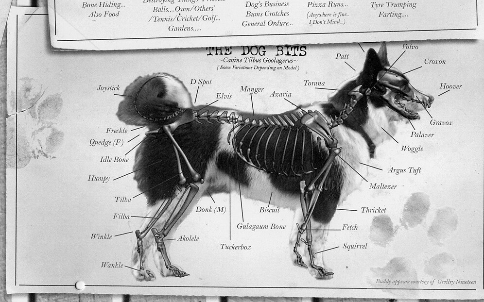 The Dog Bits | A tongue in cheek chart of a dog\'s anatomy, t… | Flickr