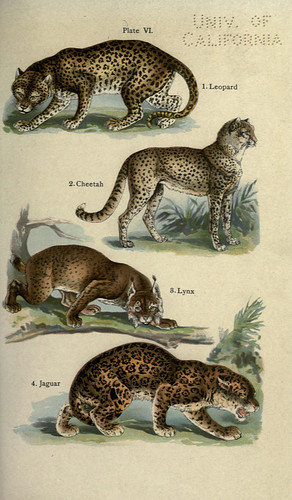 n164_w1150 | by BioDivLibrary