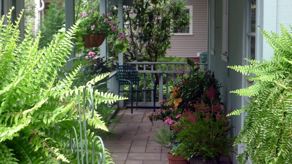 backyard vegetation and patio furniture