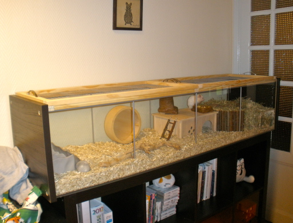 Finished Hamster Habitat Project I Ll Be Adding Some