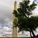 Washington Monument and tree