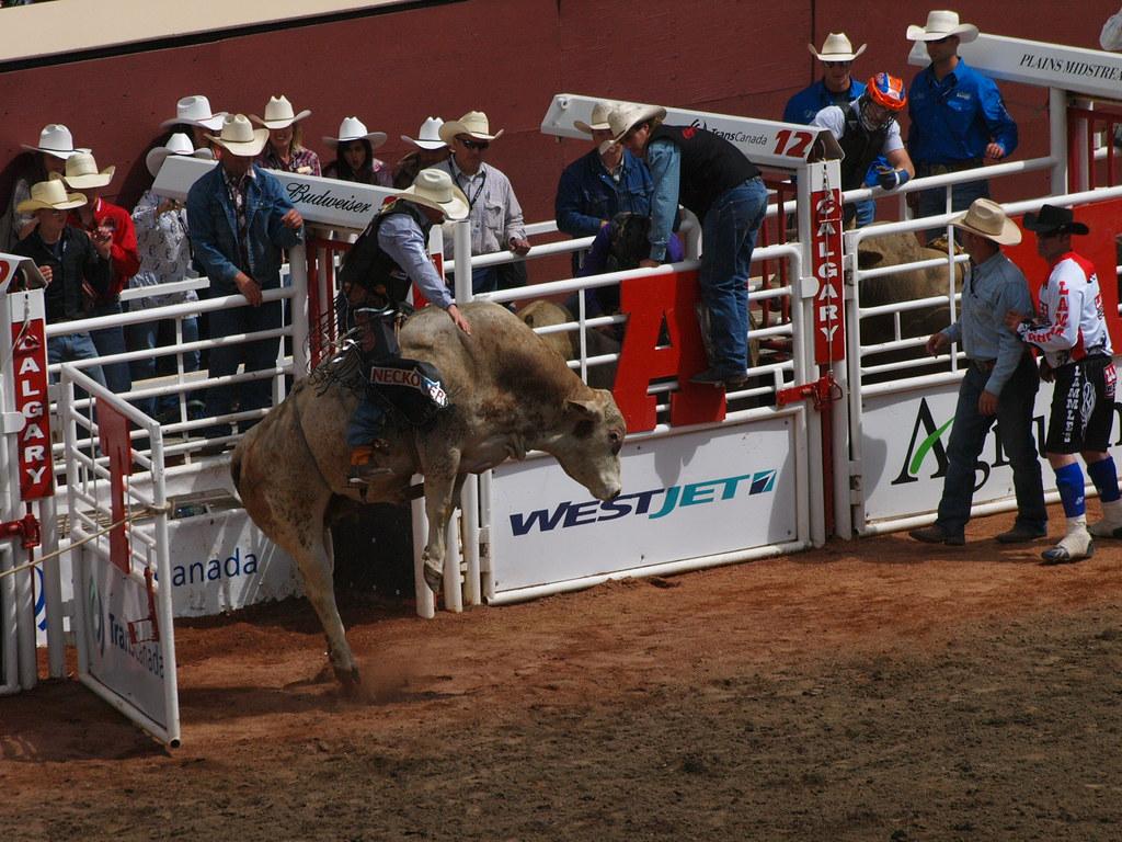 Image Result For Cowboy