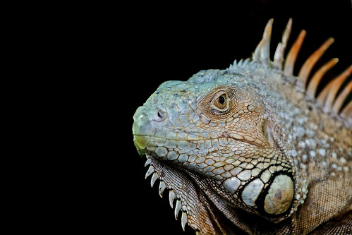 Reptil_03_V2_(Explored #8) | by Christoph Pfeilstücker