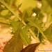 "Garden salad with ""gazpacho"" tomato, goat cheese, red bell pepper Alinea Restaurant Chicago Gluten-Free (3)"