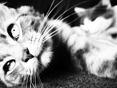 Kittycats | by ChelseaRenee2011