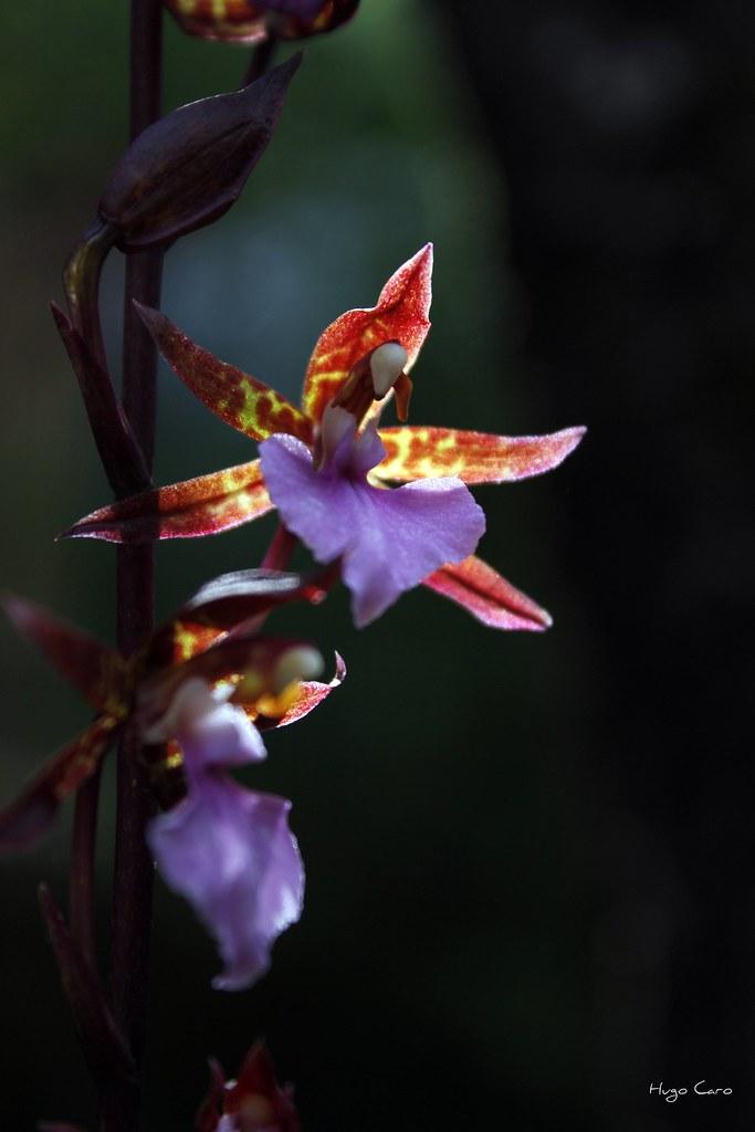 Jardin Botanico Orquídeas Moxviquil, San cristobal de las