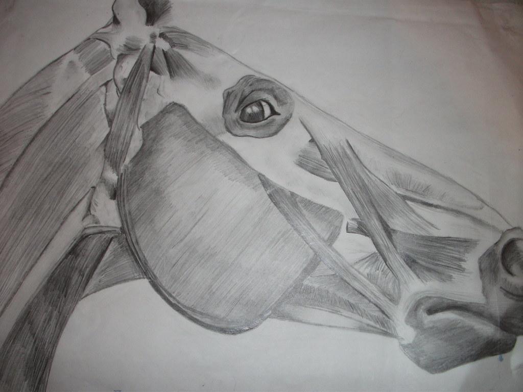 Horse Head Anatomy Sketch | Horse Head anatomy sketch, penci… | Flickr