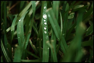 Drops on Blades | by sundero