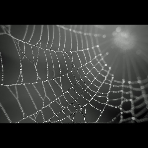 Droplets on spider web #2 | by nipomen2