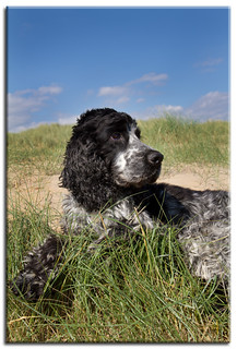 dog in the dunes | by Linda Cronin