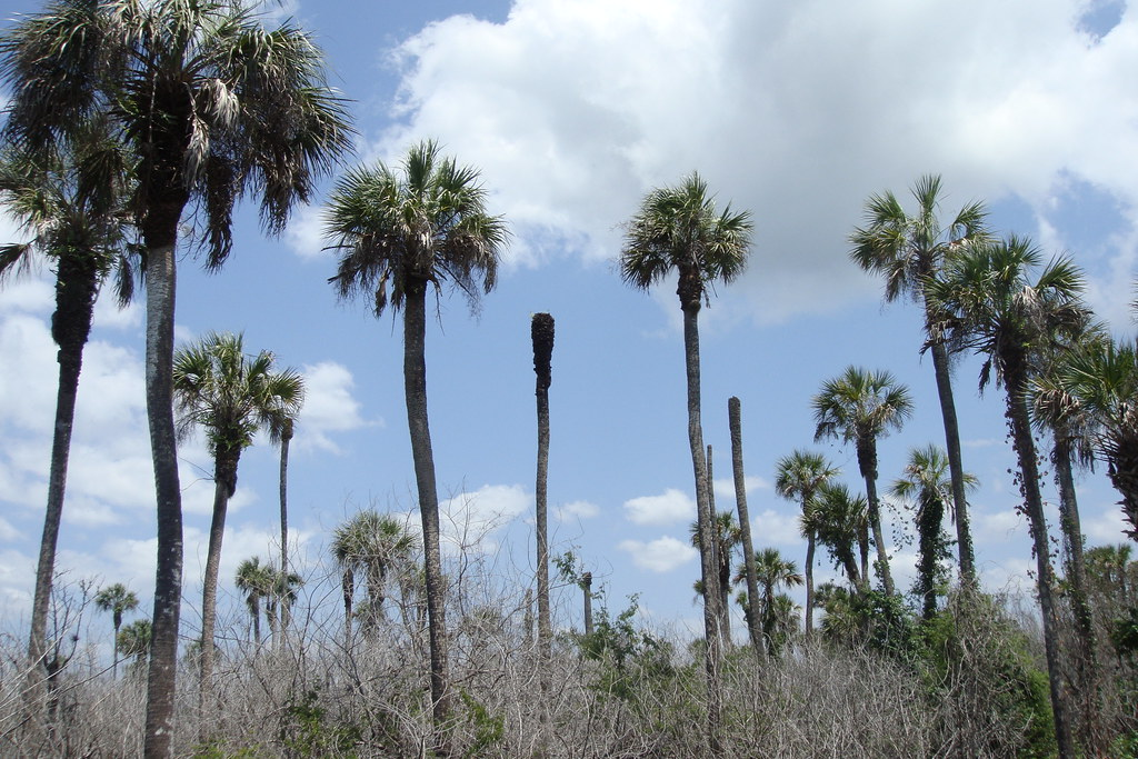 Seminole Palms Park Royal Palm Beach Fl