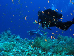 Go scuba diving at the Red Sea - Things to do in Jeddah